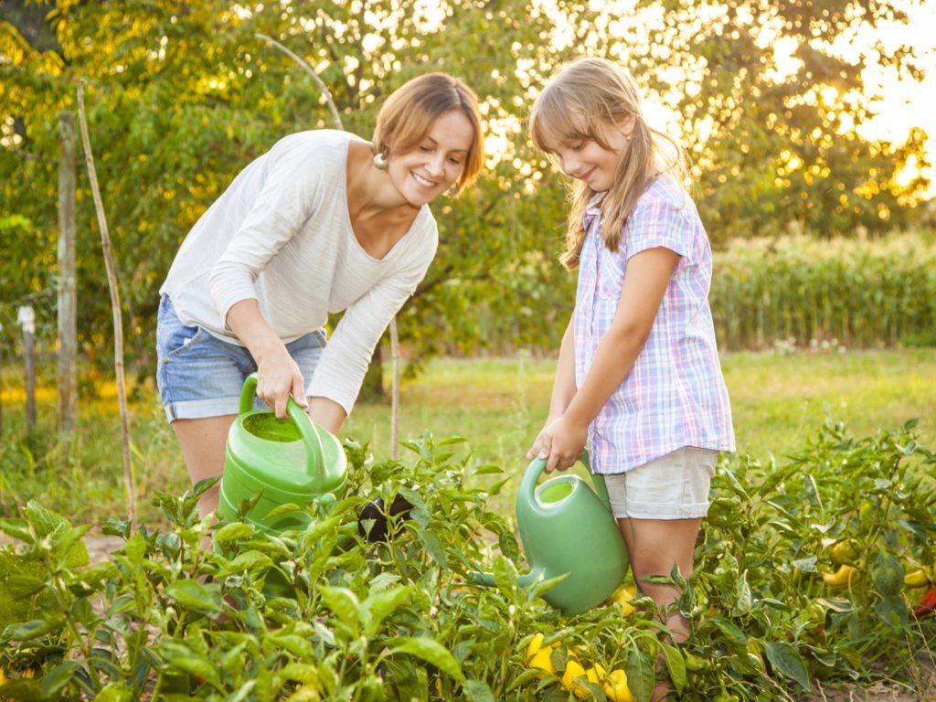 Gardening and Landsacping